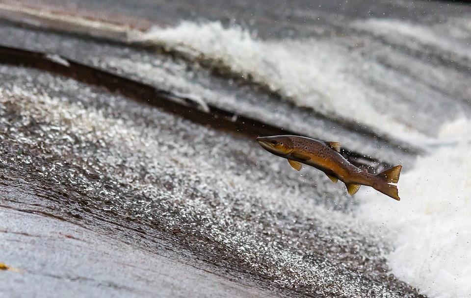 escalera salmones pitlochry